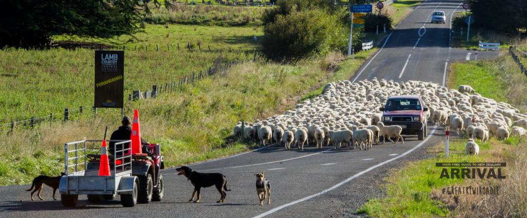 Sheep (2 of 4)