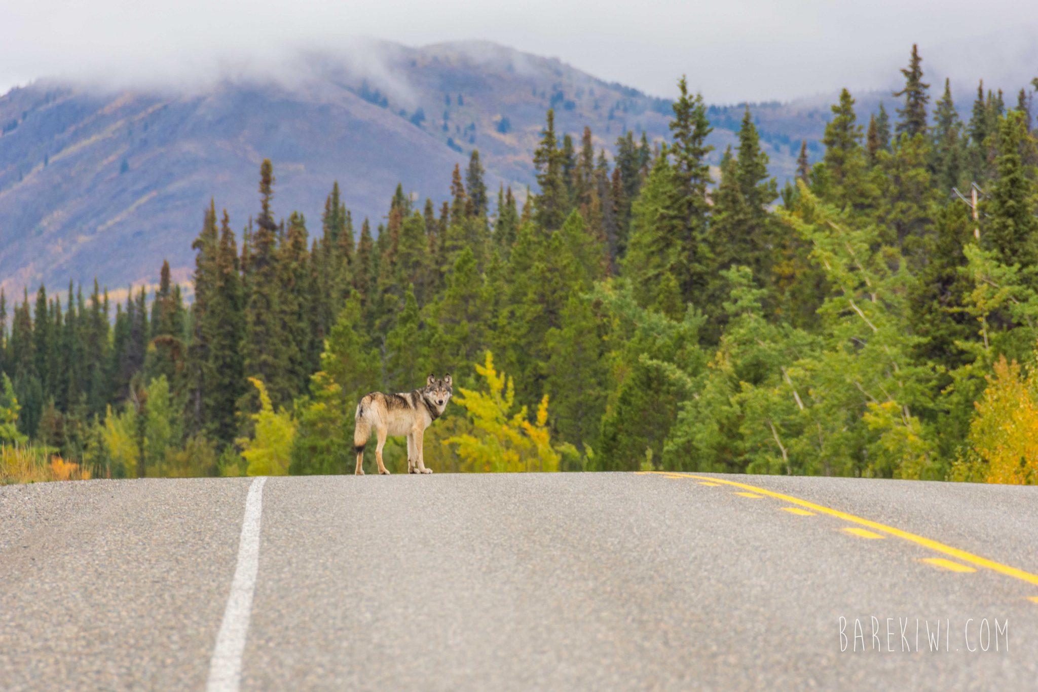 Yukon Images WEB (26 of 34)