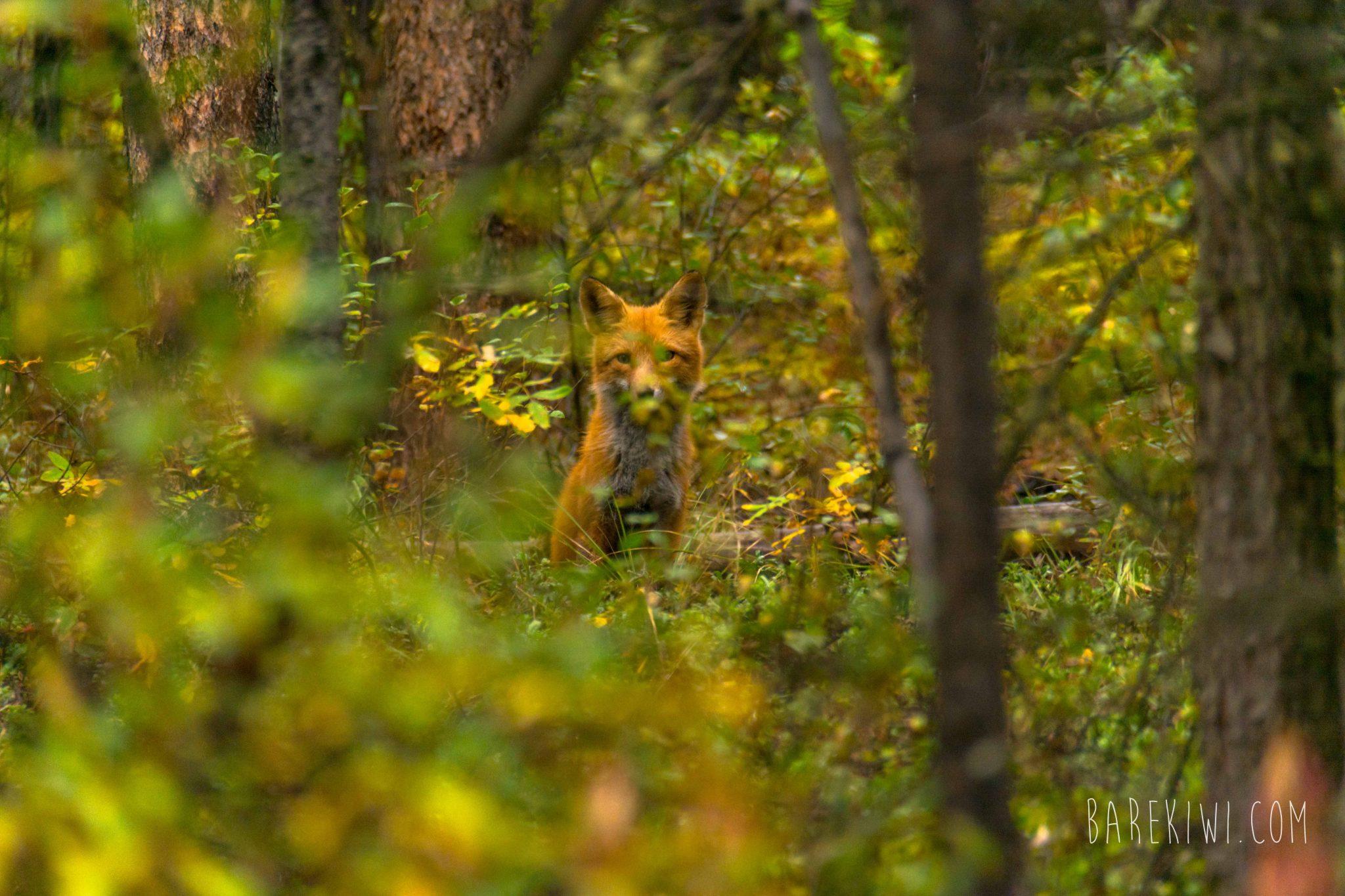 Yukon Images WEB (5 of 34)
